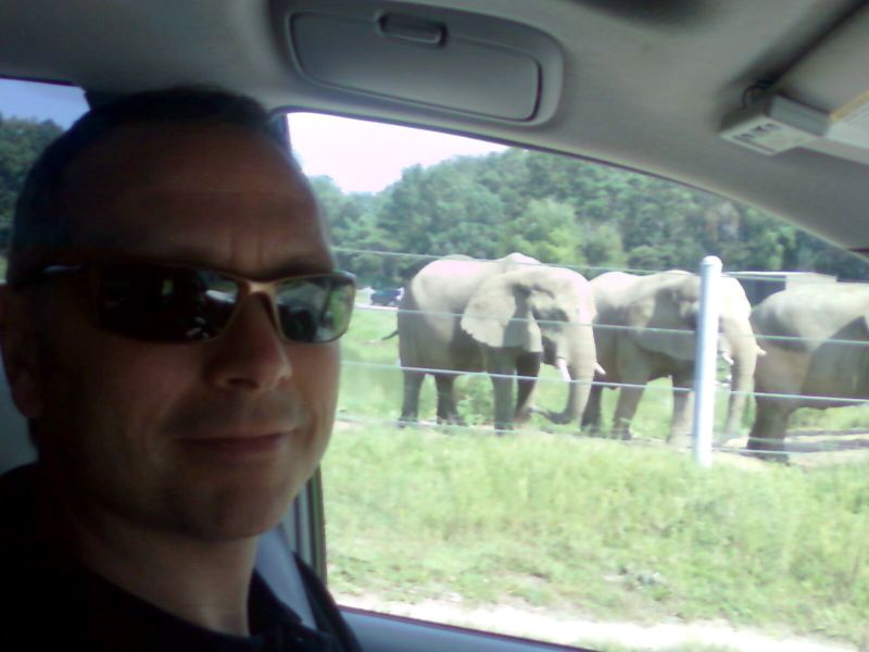Scott's elephants