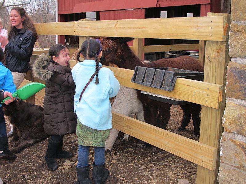 Visit to the Marks' alpaca farm